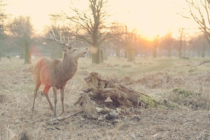 Nice deer!!