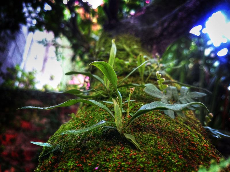 Nice green plant